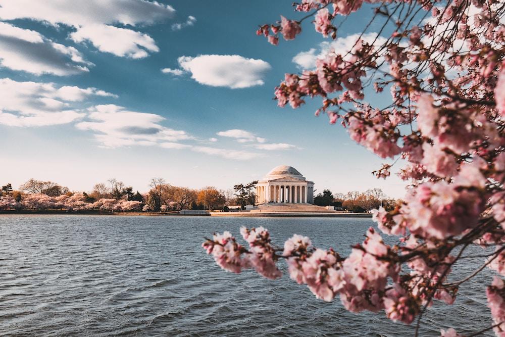 2019 National Cherry Blossom Festival In Washington Dc